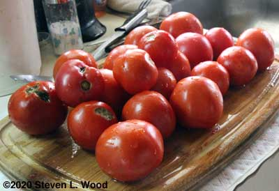 Some tomatoes for purée