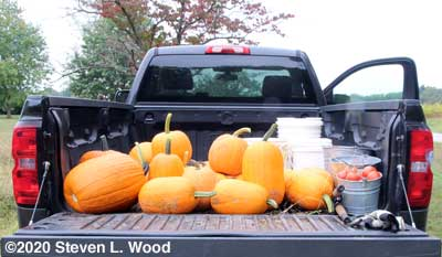 Pumpkins and tomatoes on truck
