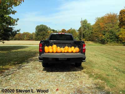 Small truckload of pumpkins
