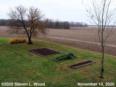 Our Senior Garden - November 14, 2020