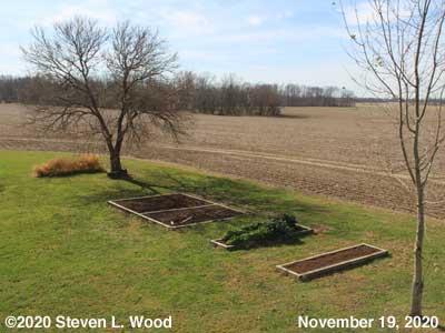 Our Senior Garden - November 19, 2020