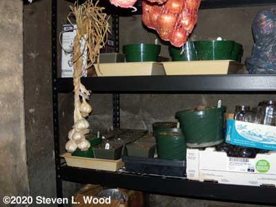 Dormant gloxinias stored on dark shelves