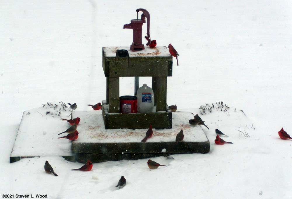 Birds on shallow well