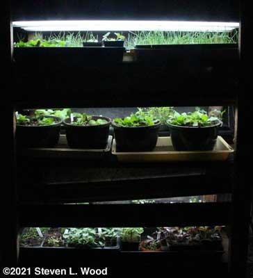 Plant rack - March 2, 2021