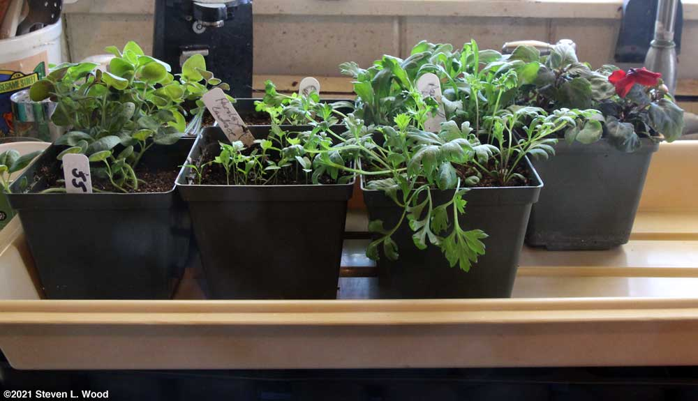 Plants to be uppotted