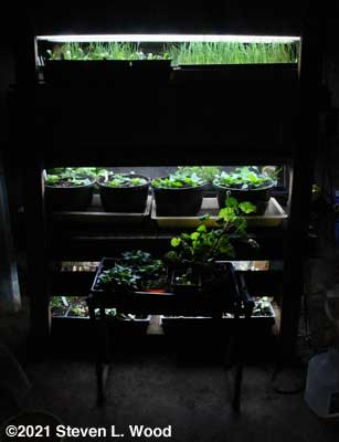 Plant rack - March 4, 2021