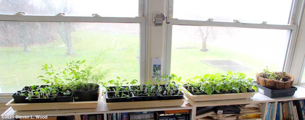 Plants in sunroom