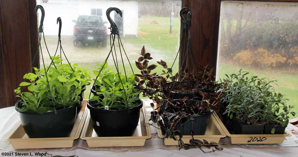 Plants on dining room table