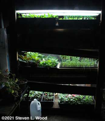 Our plant rack - March 18, 2021