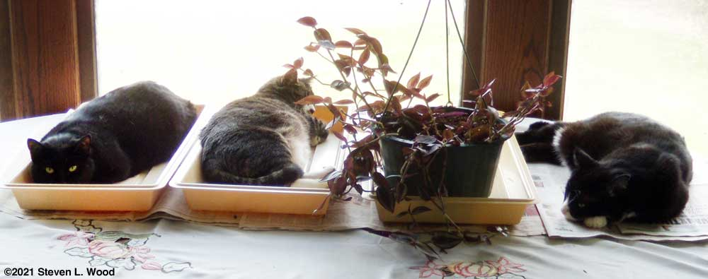 Cats take over empty plant trays