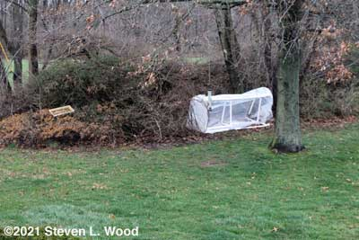 Cold frame blown into bushes