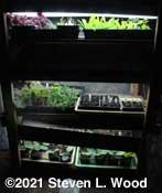 Plant rack - April 1, 2021