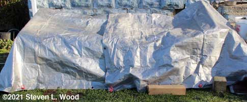 Cold frame covered with tarps