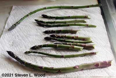 First asparagus of 2021