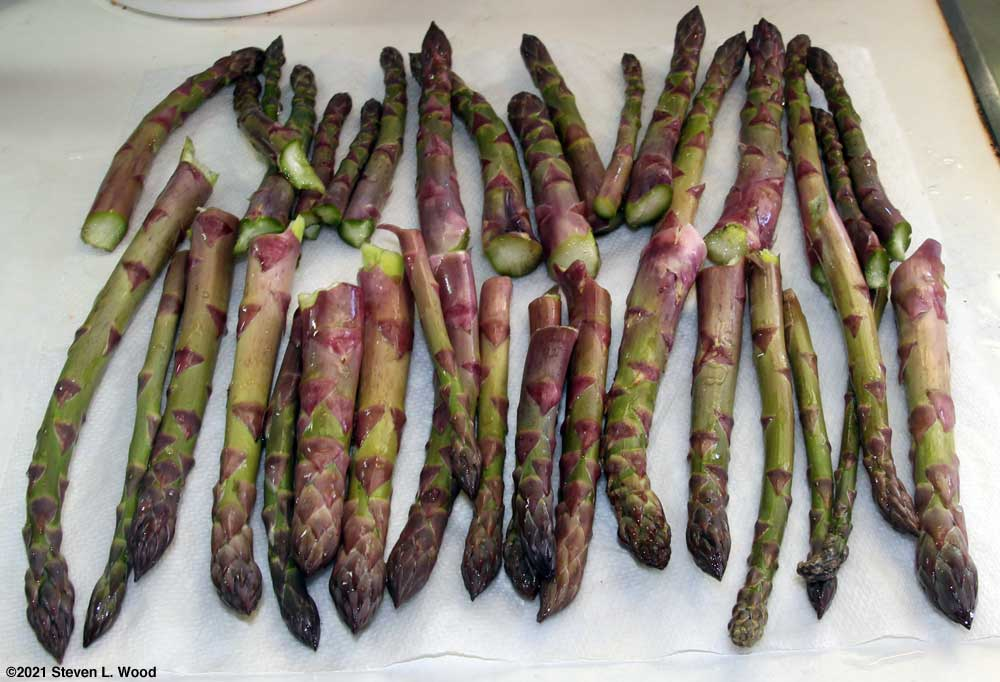 April 14, 2021 asparagus picking