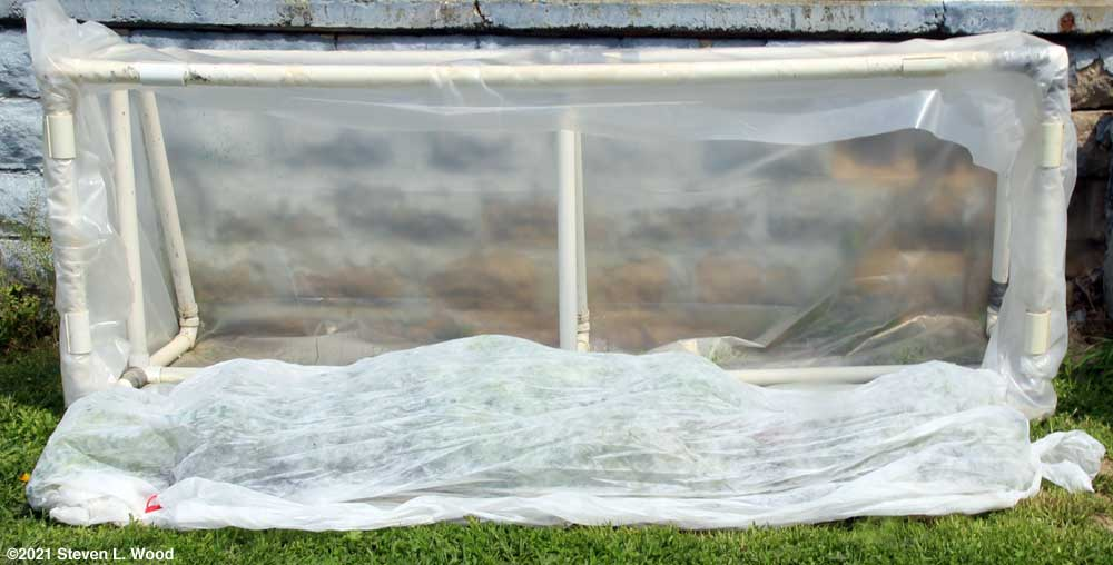 Cold frame transplants covered with floating row cover