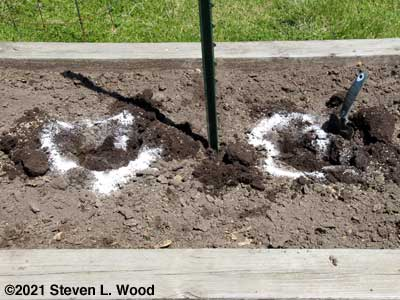 Preparing planting holes