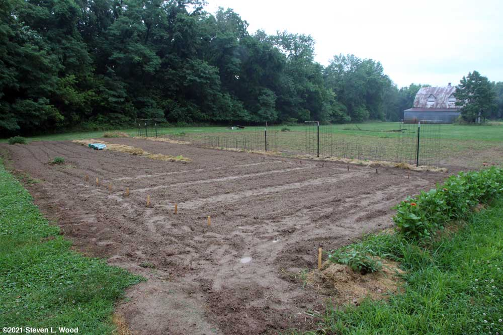 Planted areas of our East Garden