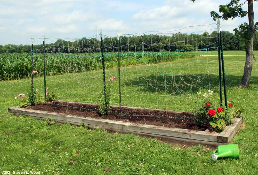 Cleared trellis, ready for cucumbers