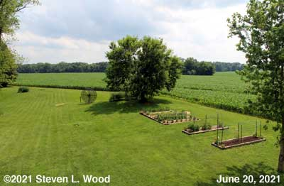 Our back yard and Senior Garden - June 20, 2021