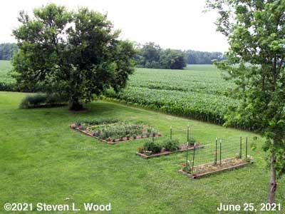 Our Senior Garden - June 25, 2021