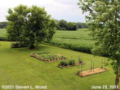 Our Senior Garden - June 29, 2021