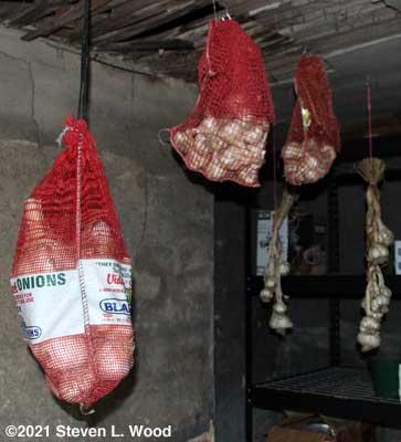 Garlic hanging in basement