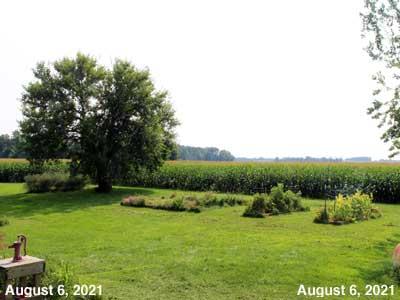 Our Senior Garden - August 6, 2021