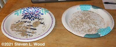 Separating tomato seeds