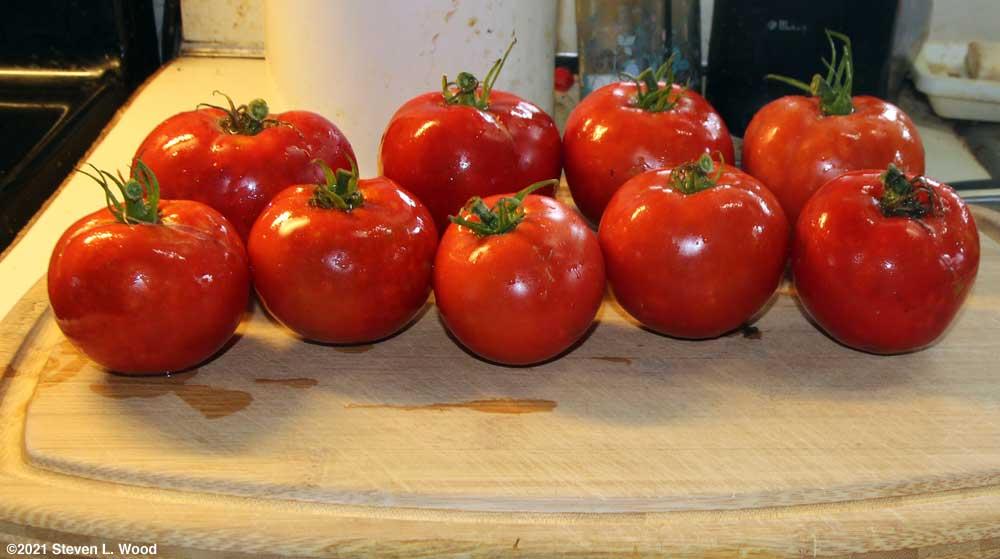 Crimson Sprinter tomatoes