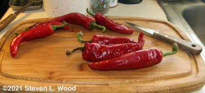 Ripe paprika peppers for seed saving