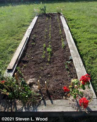 Kale and carrot bed