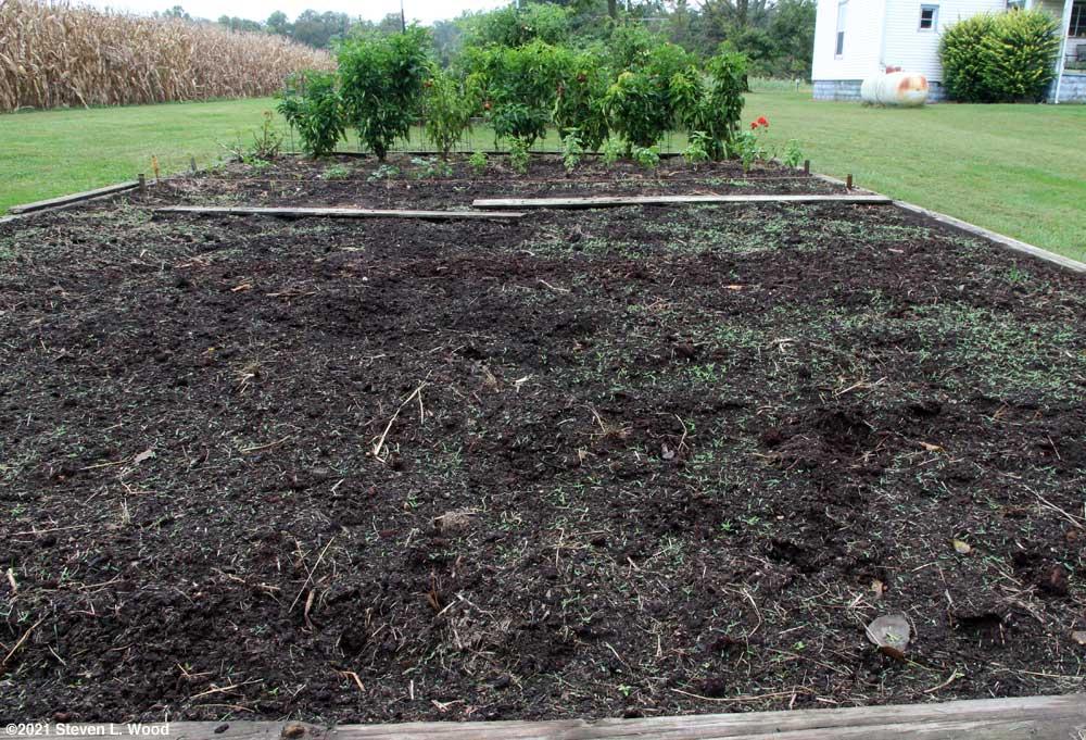 Lots of seedling weeds emerging