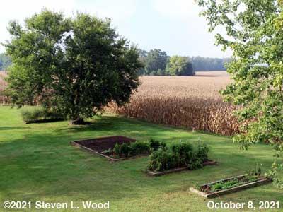 Our Senior Garden - October 8, 2021