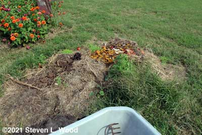 Old compost pile