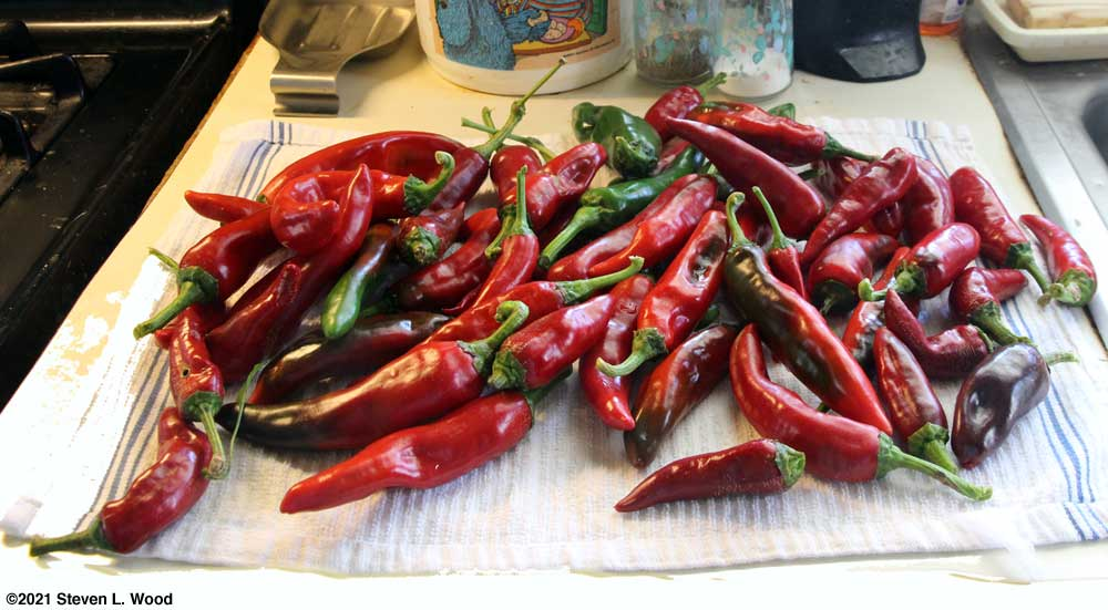 Paprika peppers
