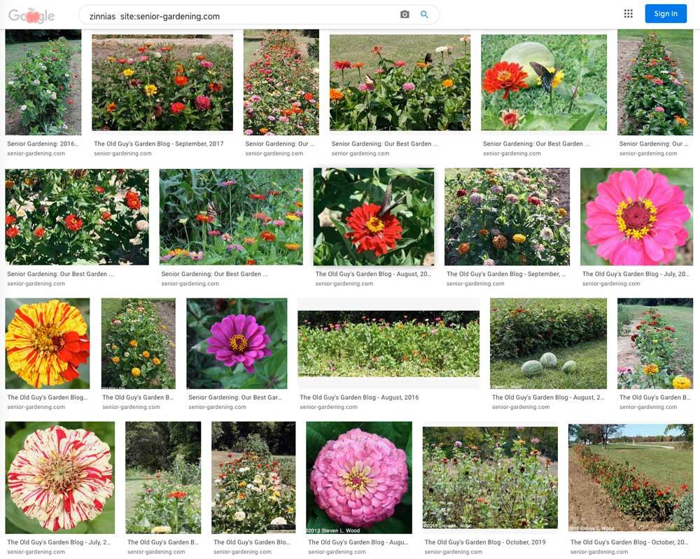 Google search for zinnias on Senior Gardening