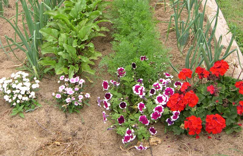 Plants as row markers