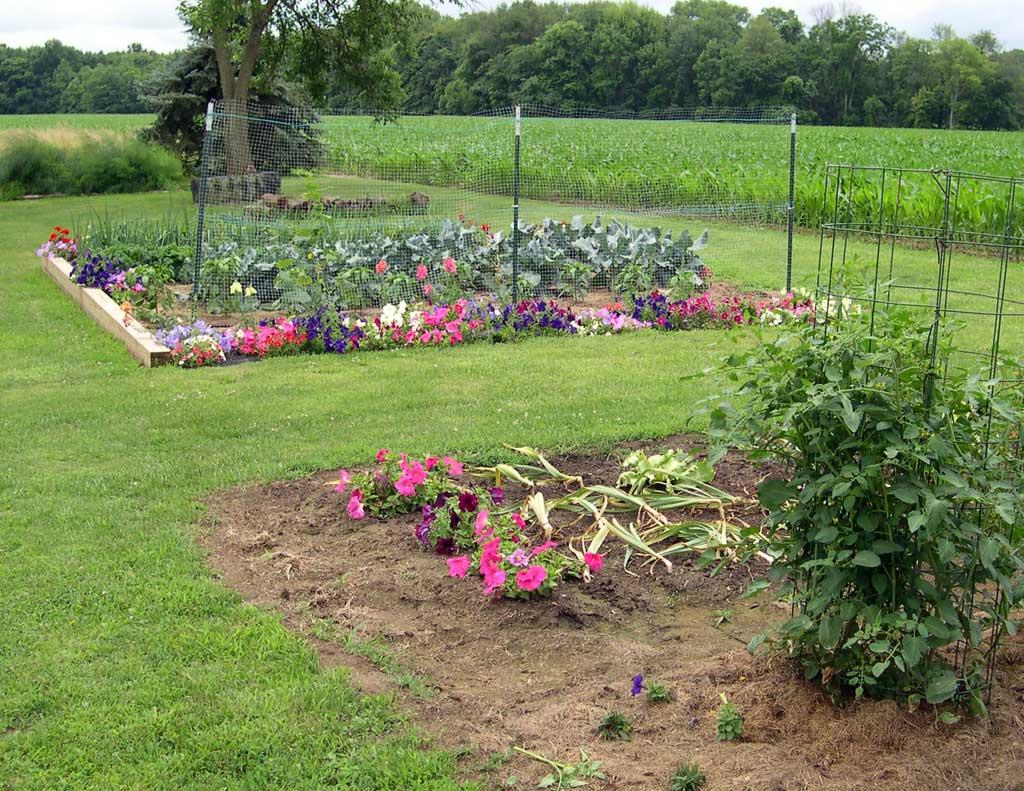 Vegetable garden rows - Flowers In The Vegetable Garden