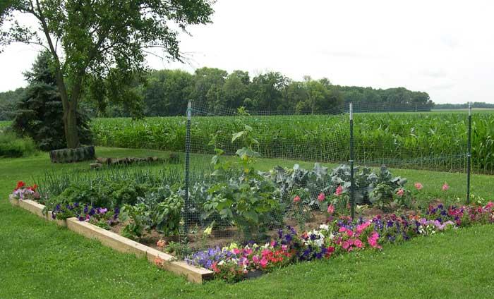 Main garden plot