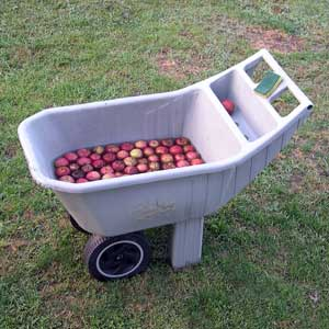 Cart of apples