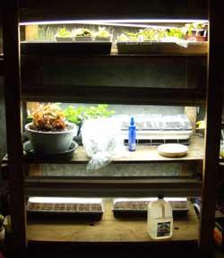 Plant rack with six fixtures