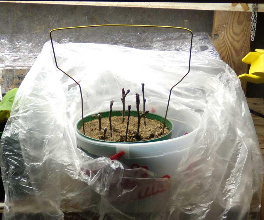 Pot Tent