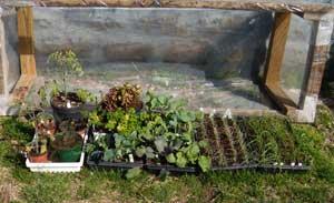 Plants outside
