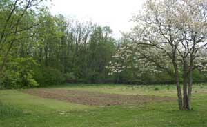 East garden plot