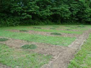 Mulched vining crops