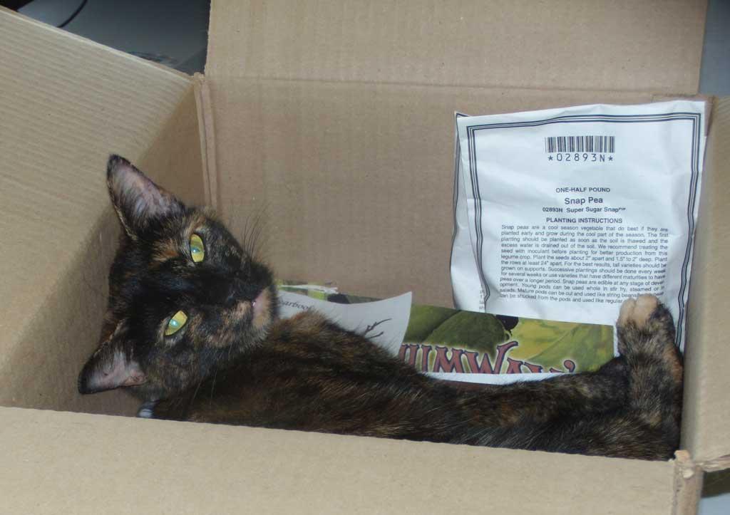 Molly in a box of garden seeds