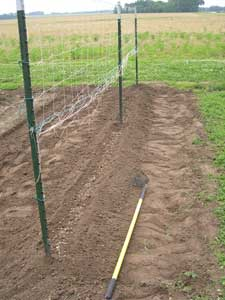 Seedbed for Sugar Snaps