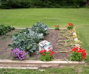 Color in the vegetable garden