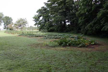 East Garden - July
